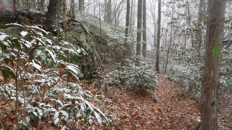 On Chimney Top Trail in Frozen Head State Park