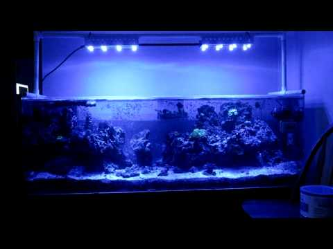 What is points for fish tank to check?