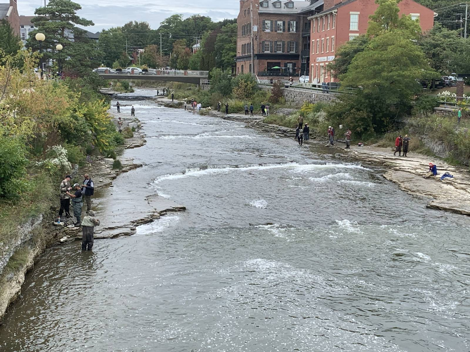 Salmon run in Port Hope