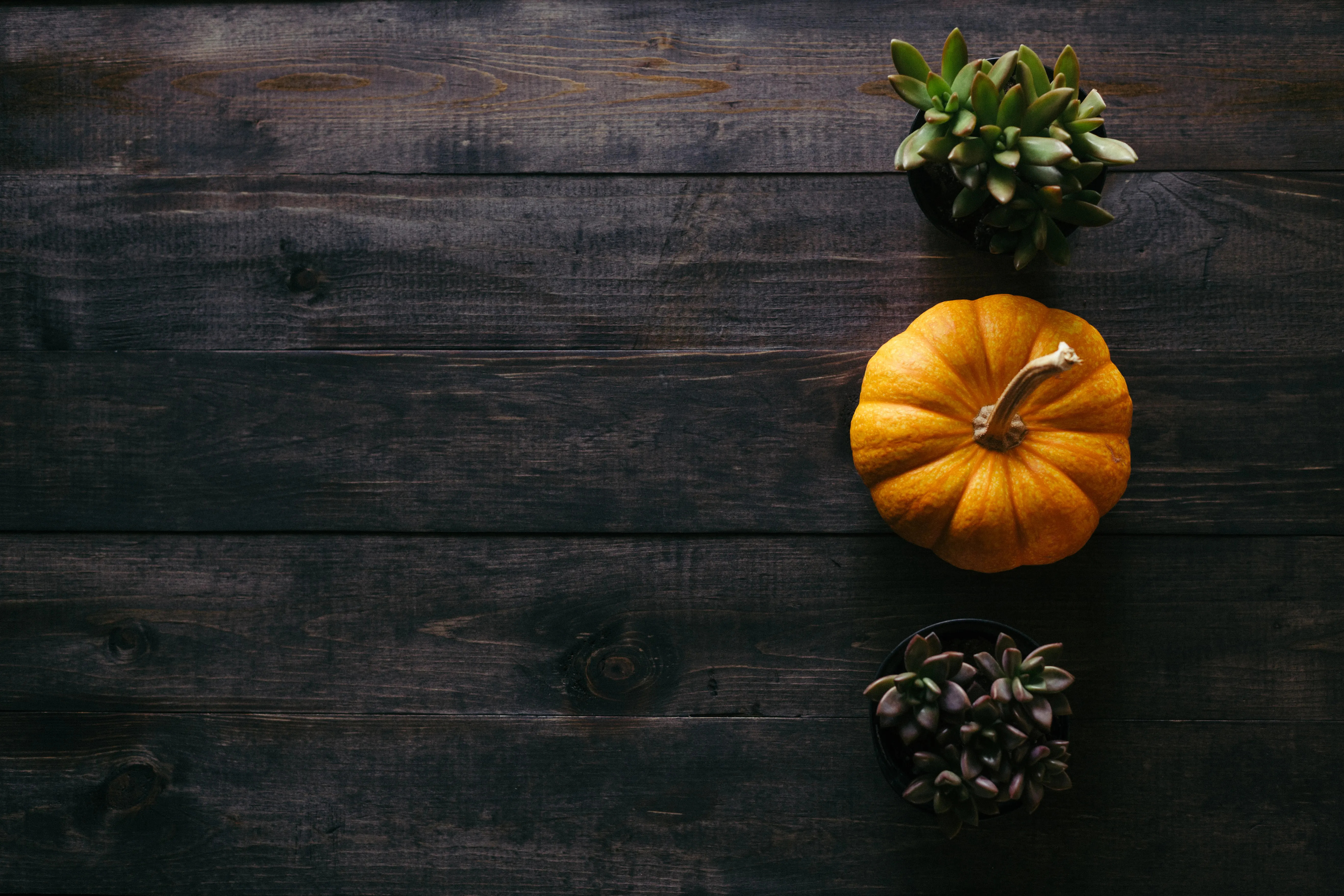 Image of: pumpkin and other plans on black wood background