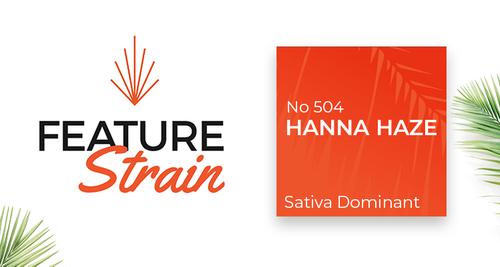 No. 504 Hanna Haze Strain