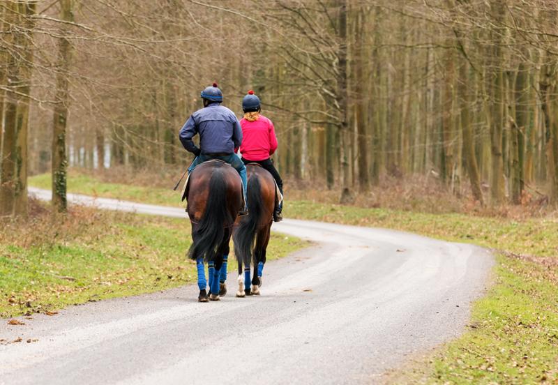 Retraining an ex-racehorse to enjoy a hack
