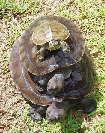 Turtle on turtle on turtle