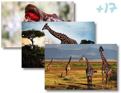 Giraffe theme pack