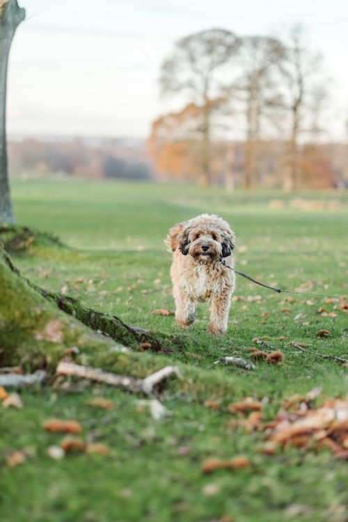 How to take better photos of dogs