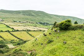 Annalack, County Kerry, Ireland
