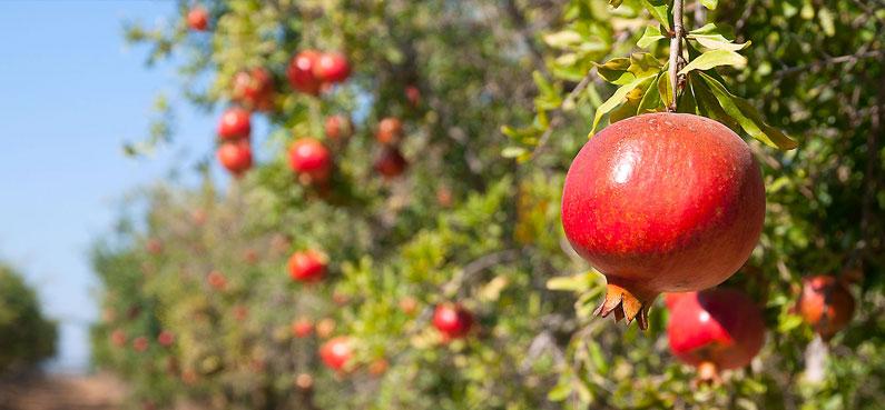 Wonderful Orchards