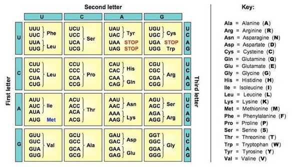 dna coding grid