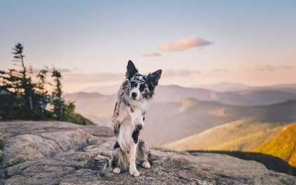 Dog-Friendly Hikes: Maine