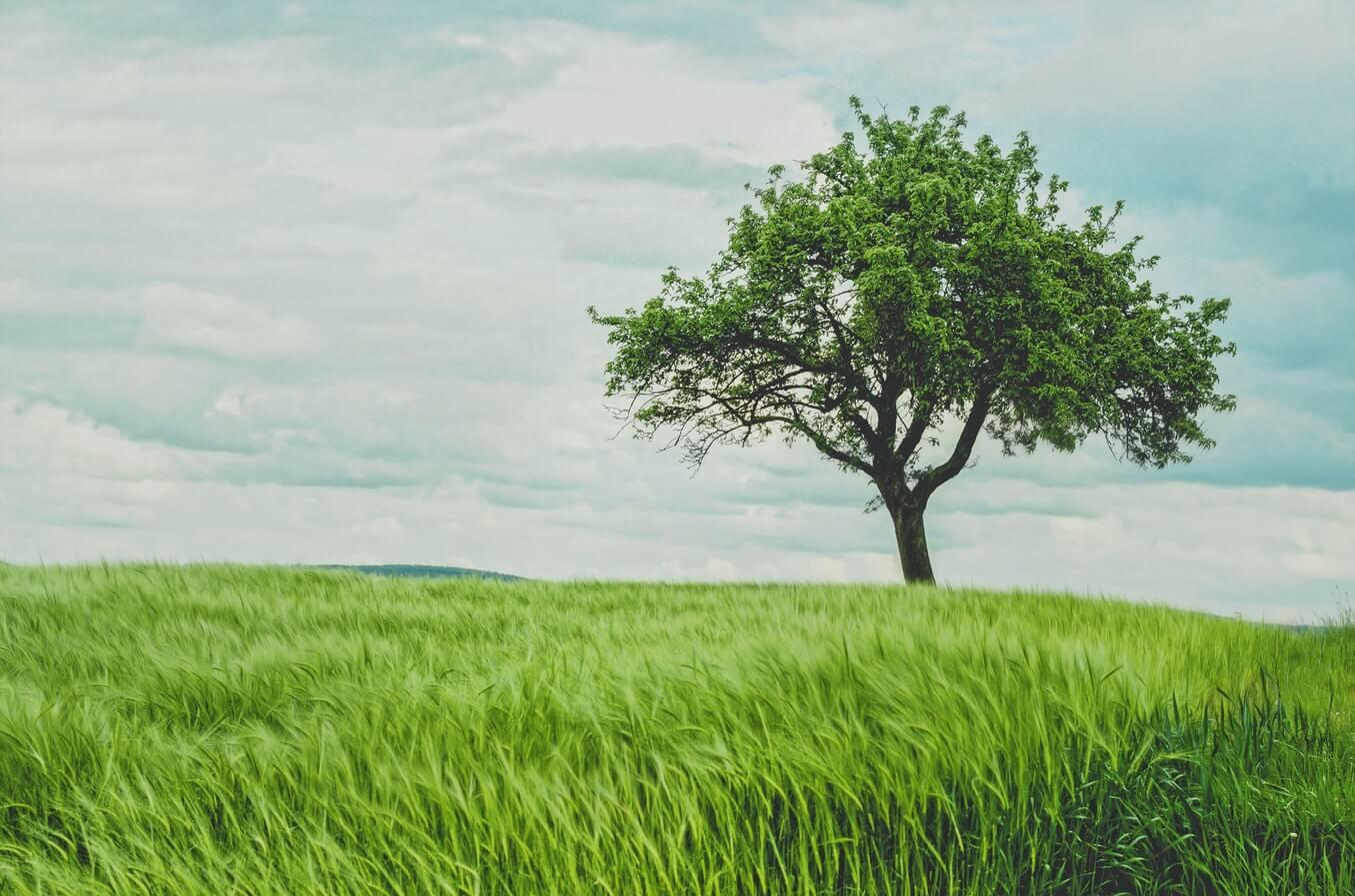 How to visualise RFM data using treemaps