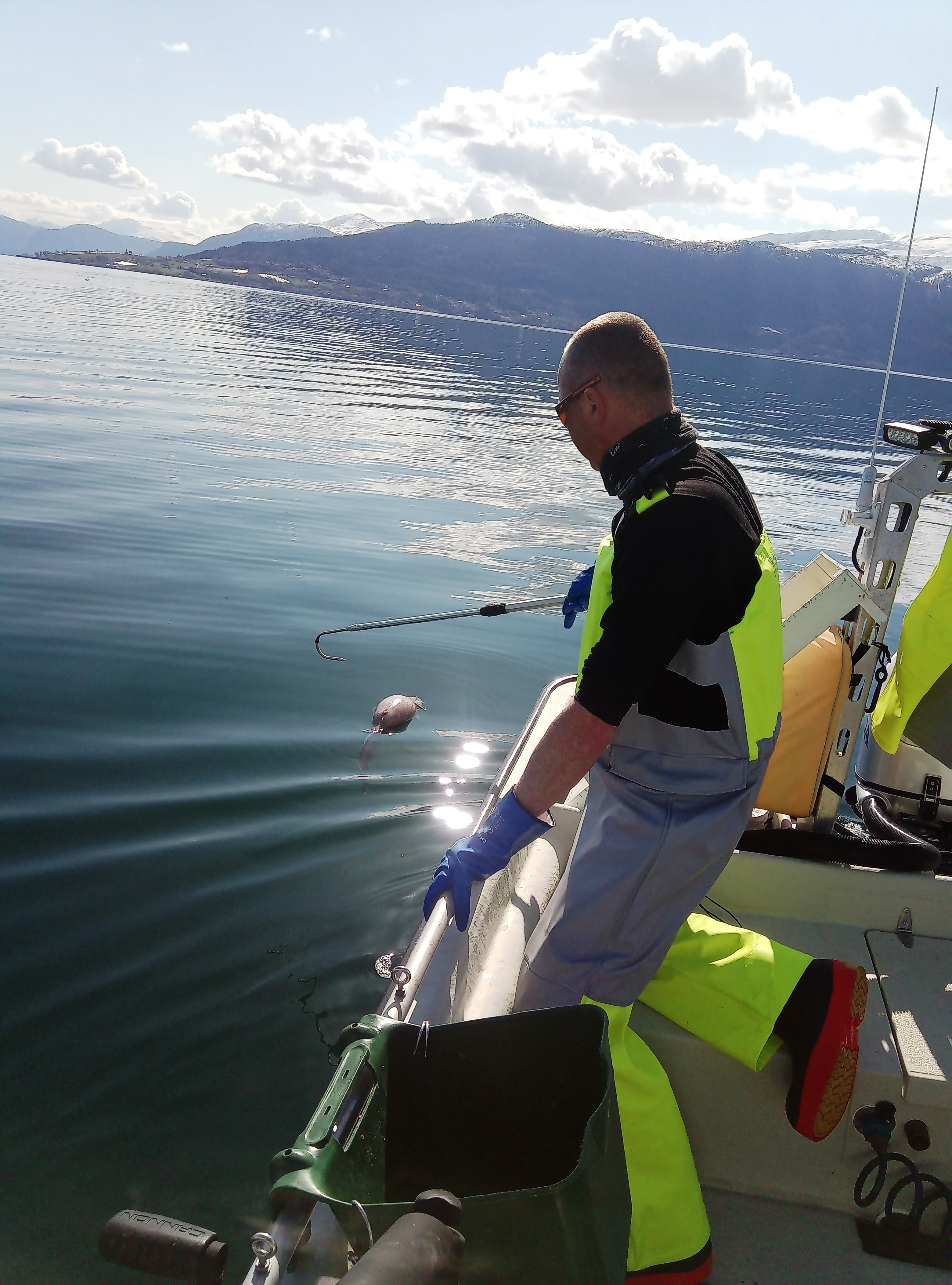 Local fisherman for a day? Try Balestrand Fjord Angling in Sognefjord!