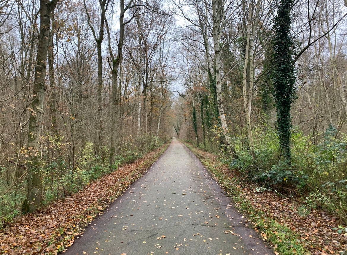 French rail trail surrounded by trees