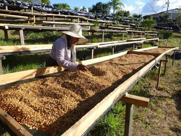 honey-processing