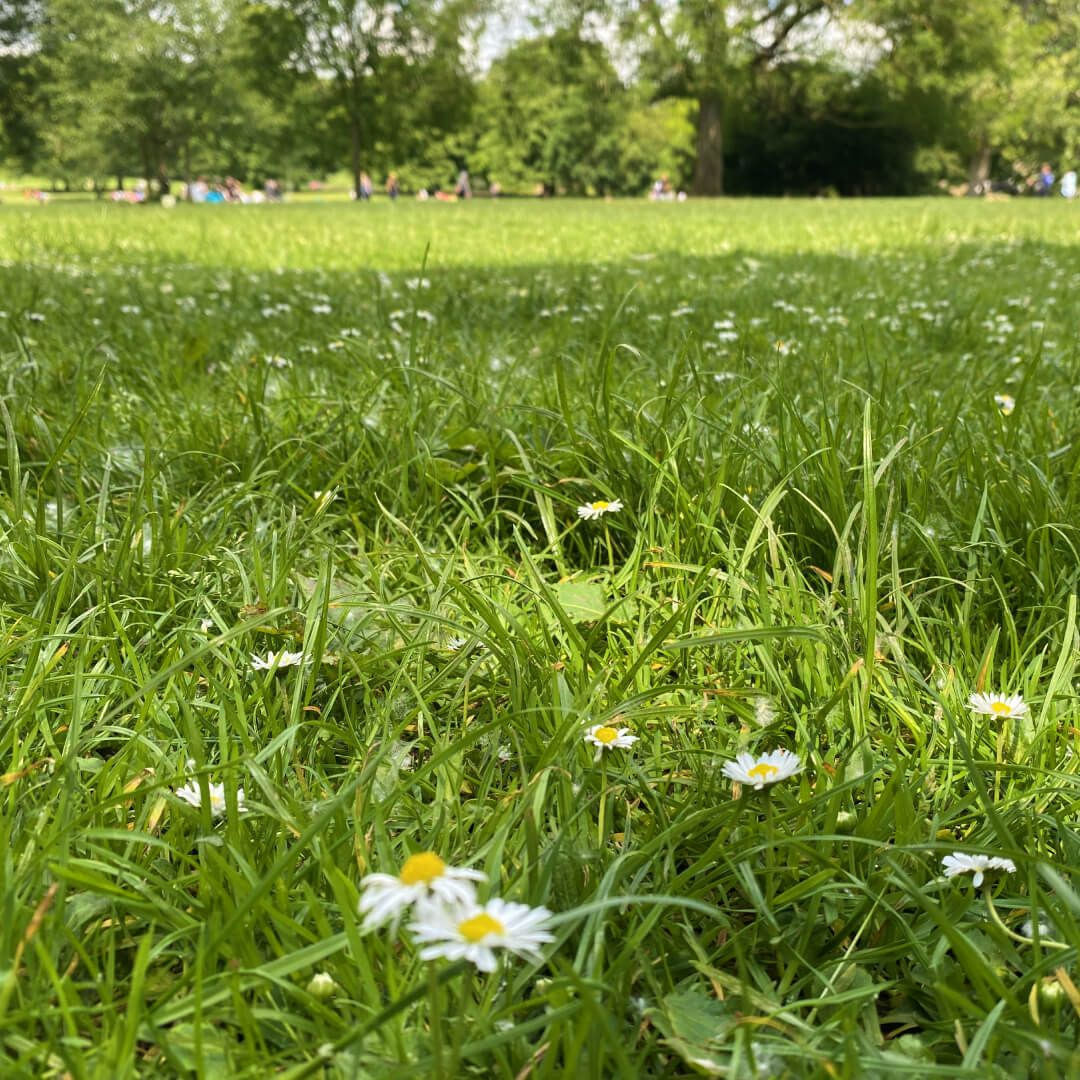 Meanwood Park field with flowers