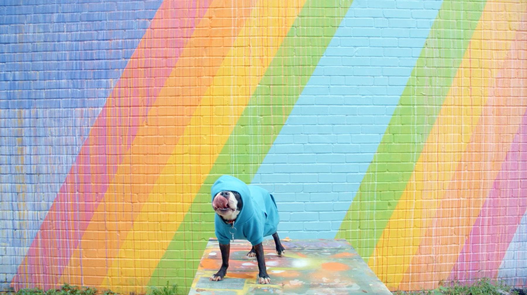 Make Raleigh Colorful