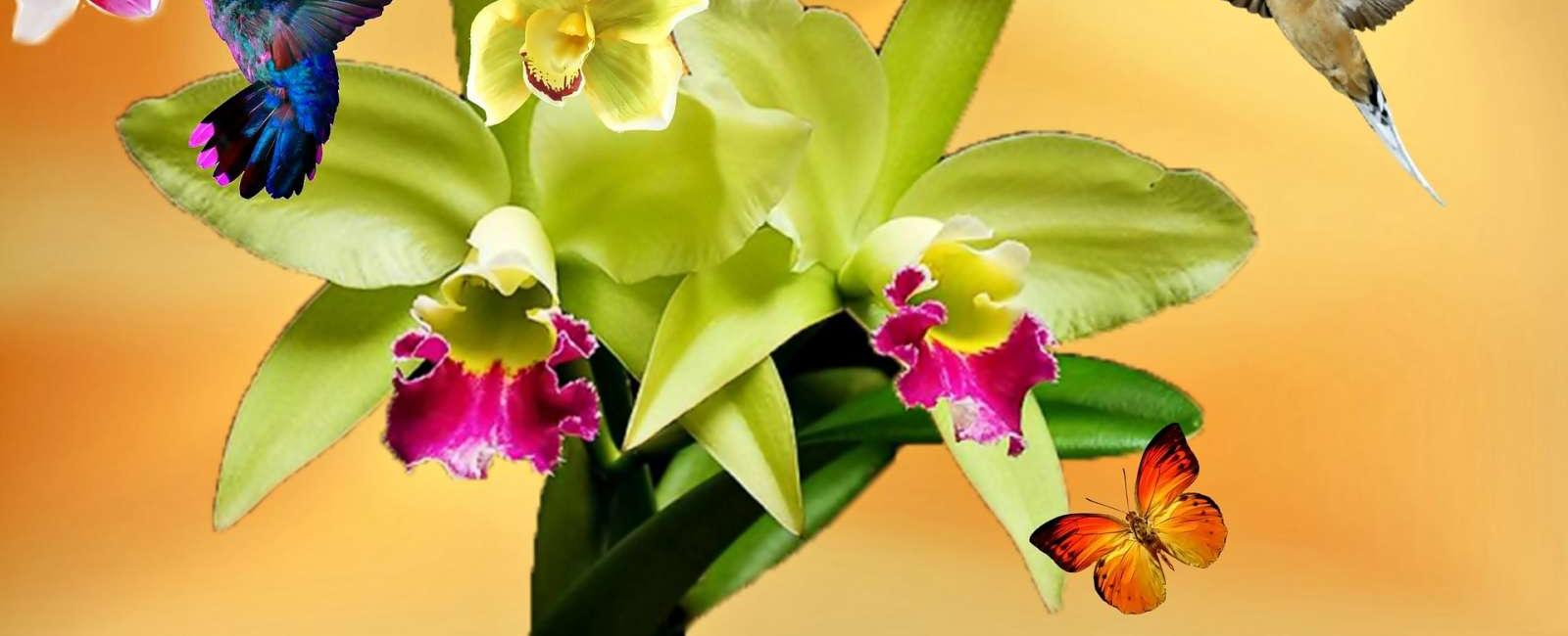 Curiozitati si sfaturi despre Orhidei