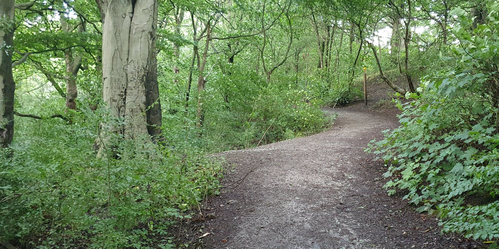 Muddy path through Nan Whins Woods surrounded by undergrowth
