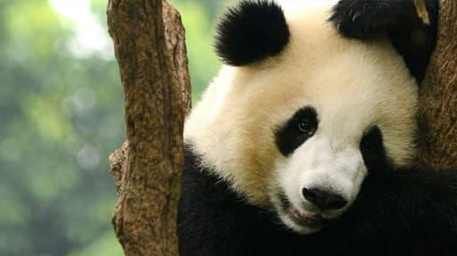 Sichuan: A profile