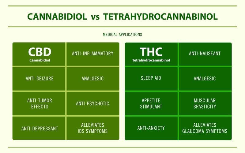 Infographic: Difference between CBD and THC