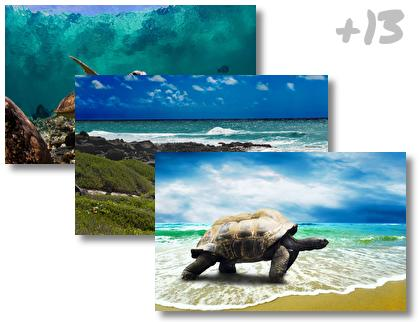 Turtle theme pack