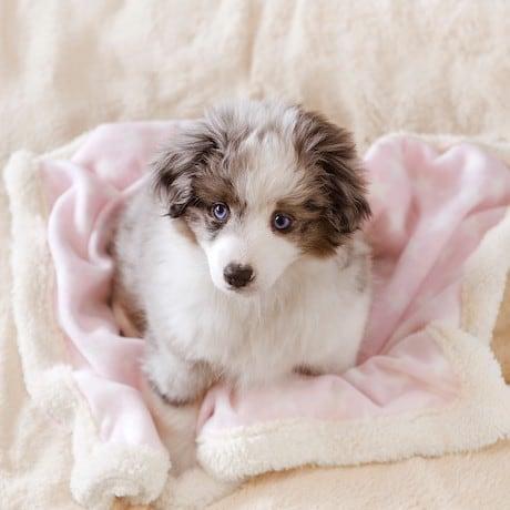 Woosmap révolutionne la recherche de cliniques vétérinaires et la prise de rendez-vous pour Vets4Pets au Royaume-Uni