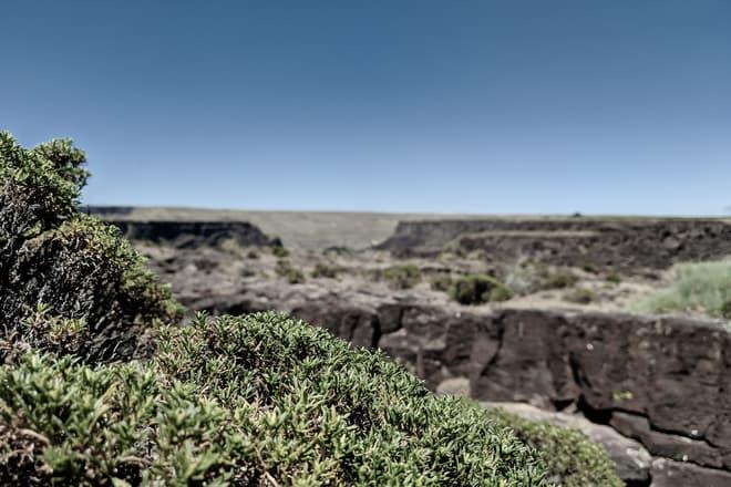 Looking over the top of a dense clump of desert scrub towards a field of broken basalt mesas.