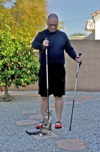 Nordic Walking poles and cat