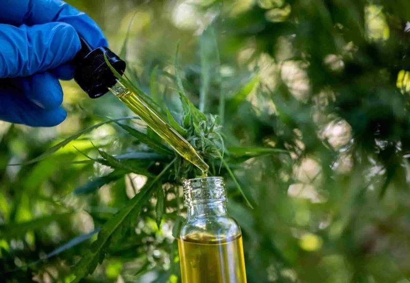 Fresh cannabis CBD and THC oil
