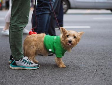 Get Dog Poop out of Shoes with These 5 Simple Methods