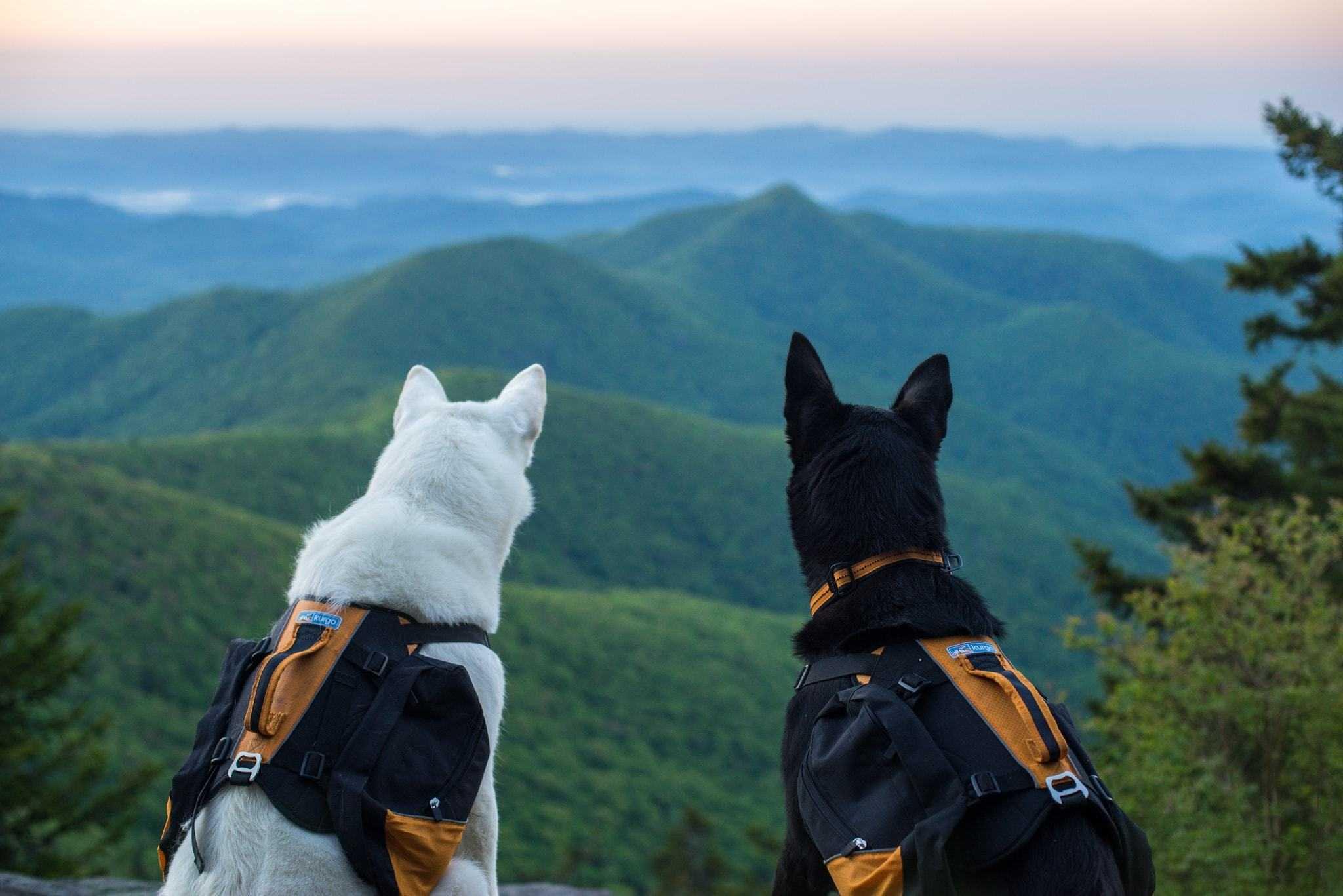 Dog Friendly Hikes in Oregon