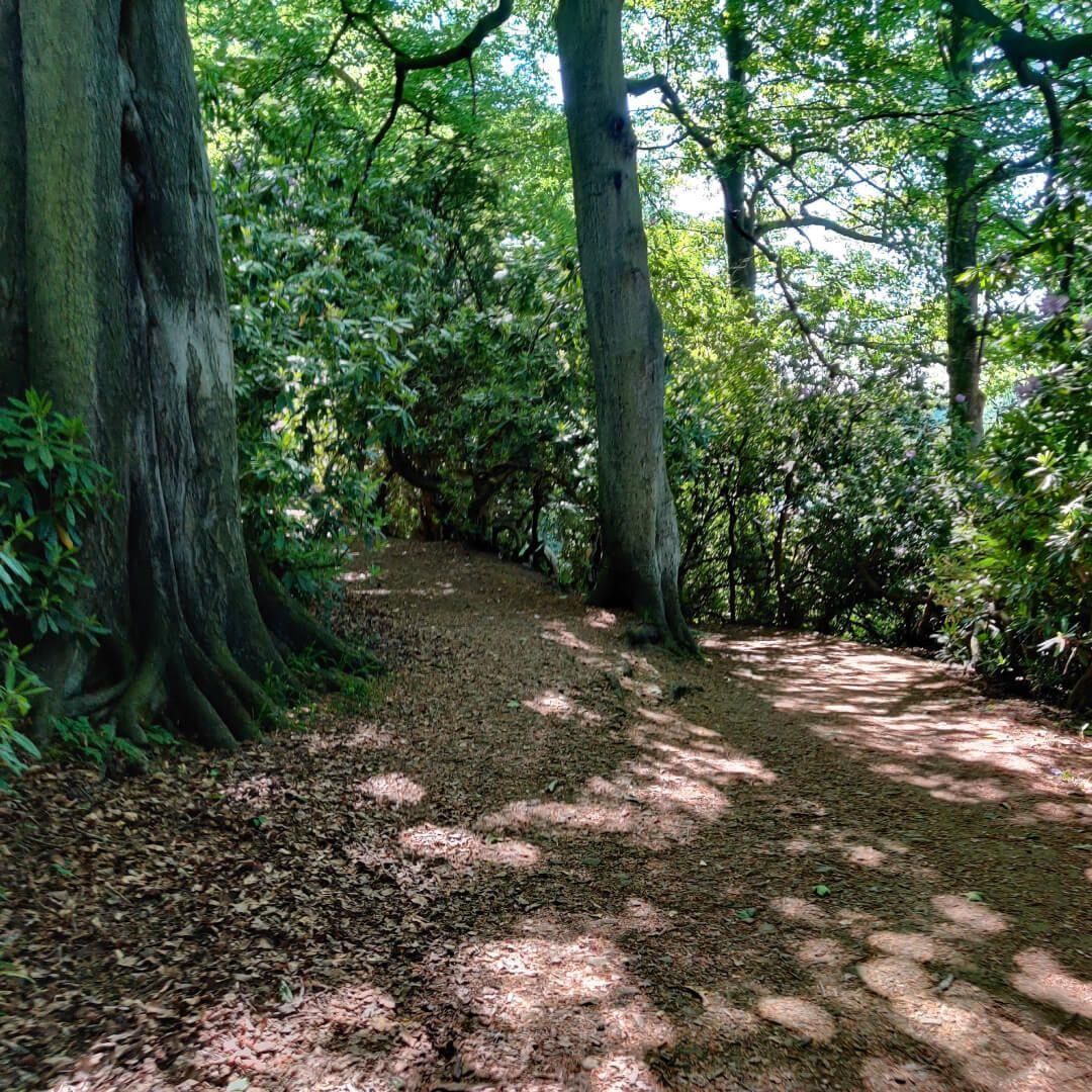 Woods at Yorkshire Sculpture Park