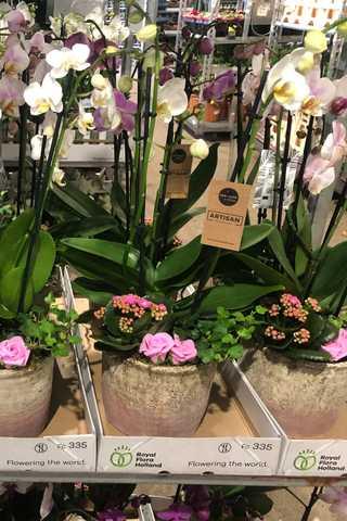 Orchidee met deco in  pot