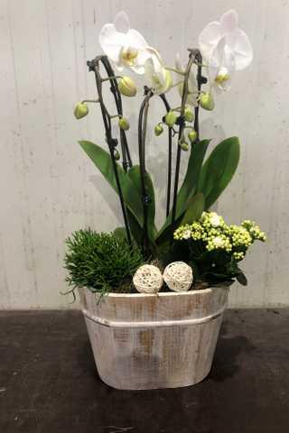 Hoog plantenbakken met orchideeën