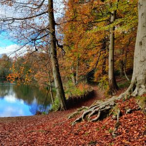 Gledhow Valley Woods in Autumn by the Lake