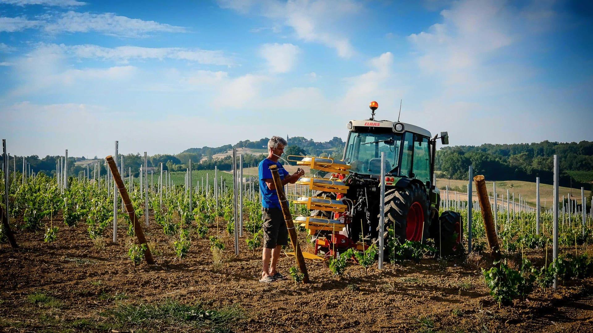 Olivier attache la vigne