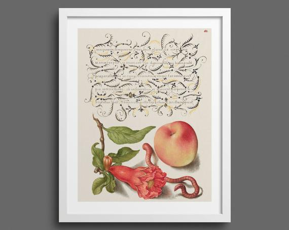 Pomegranate, Worm and Peach