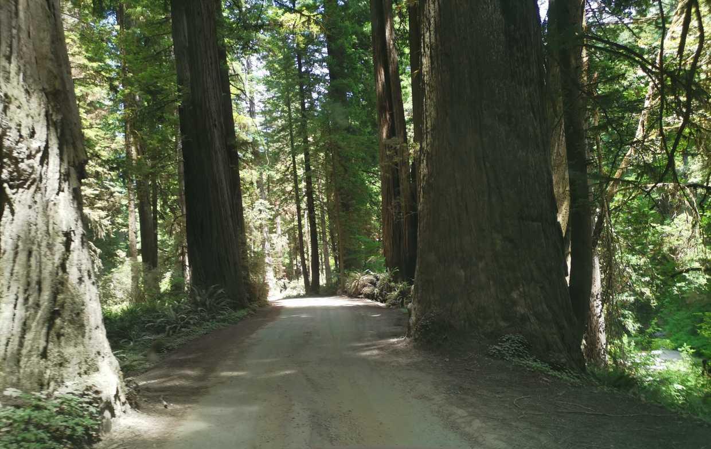 California 1, deuxième partie : SF ➡️ Oregon cover image