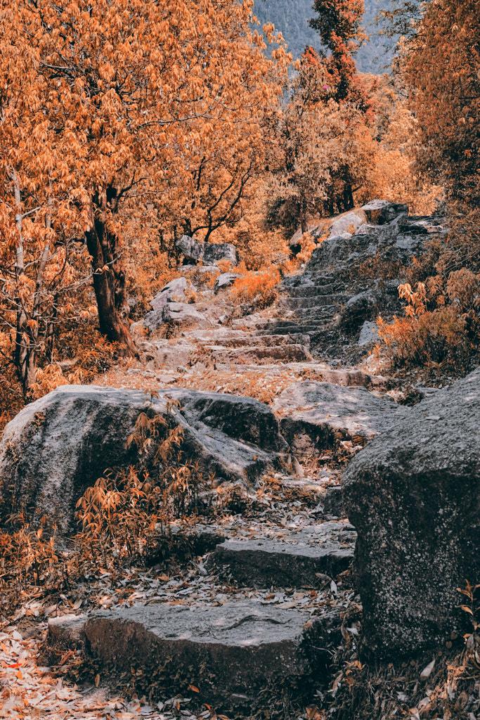 Kareri lake trek trail in autumn