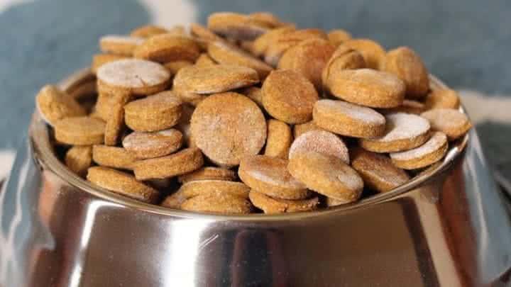 Peanut Butter Pumpkin Treats