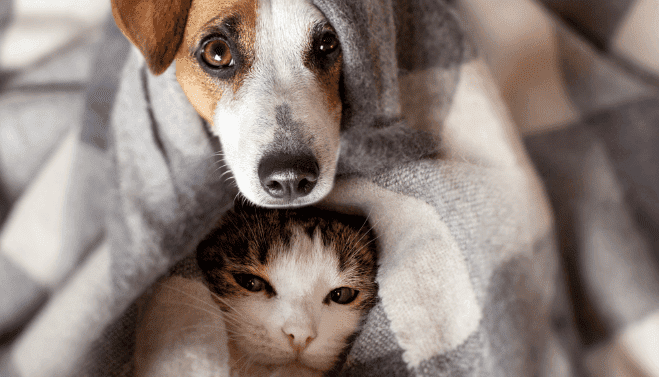 Honest Paws Cat and Dog