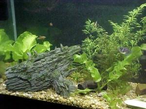 Aquariums - Different Types Of Substrate For Your Aquarium