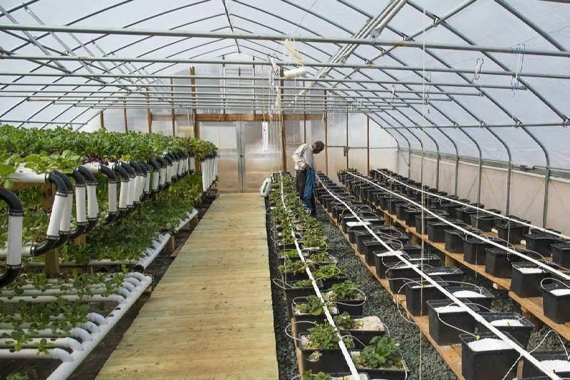 Medicinal Cannabis Greenhouse Facilities
