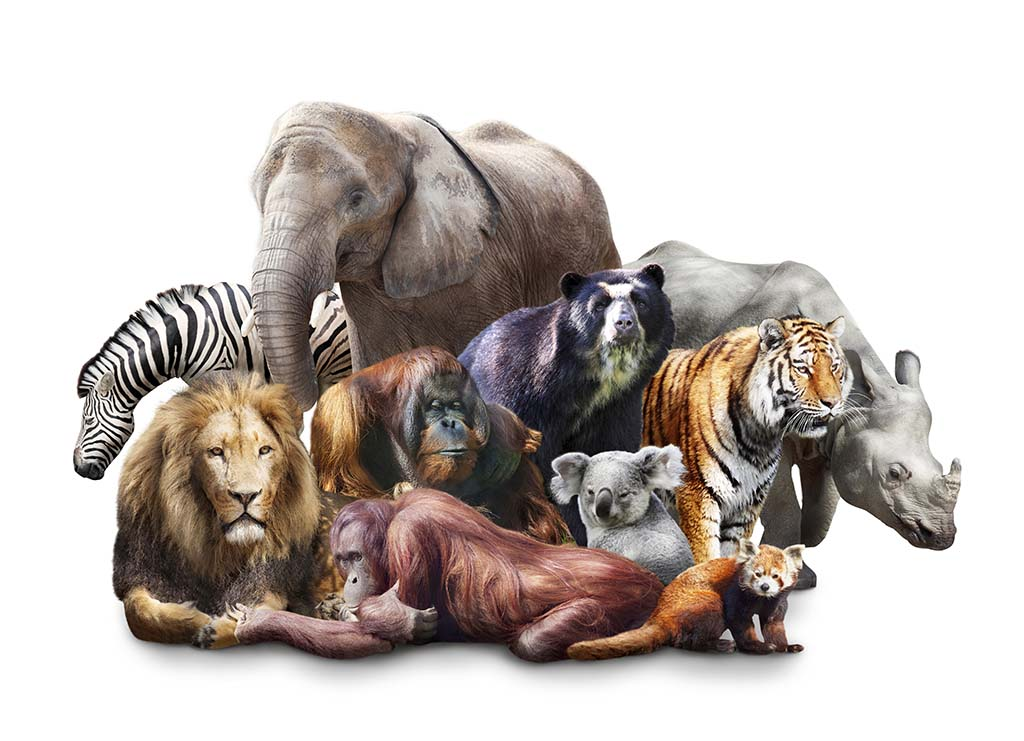 A group of wild animals