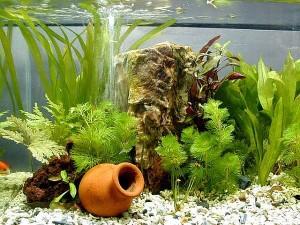 Aquarium Plants - Aquarium Planting Basics