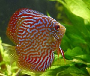 Aquarium - How Much Should You Feed Your Freshwater Fish?