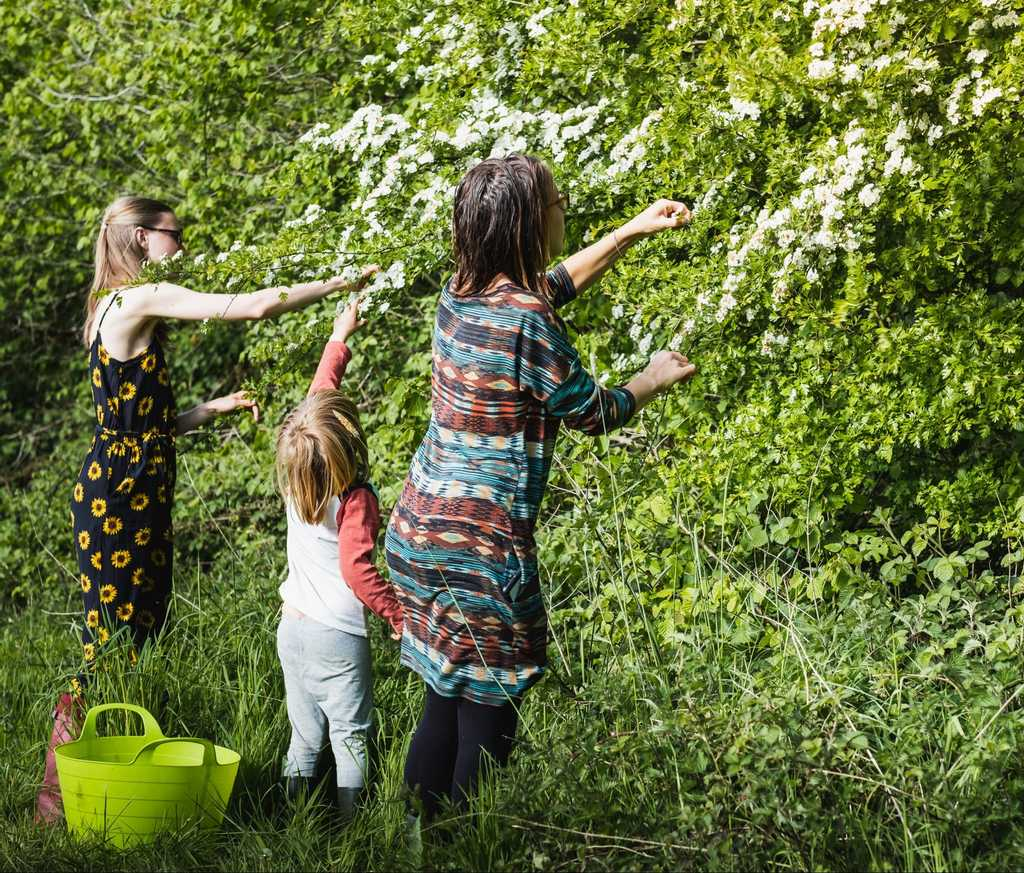 Foraging for elderflower with the family at Round the Woods