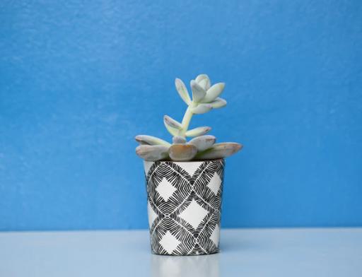 presente de natal, um vaso com planta
