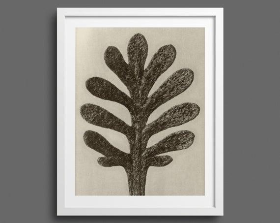 Yarrow Leaf - Plate 37