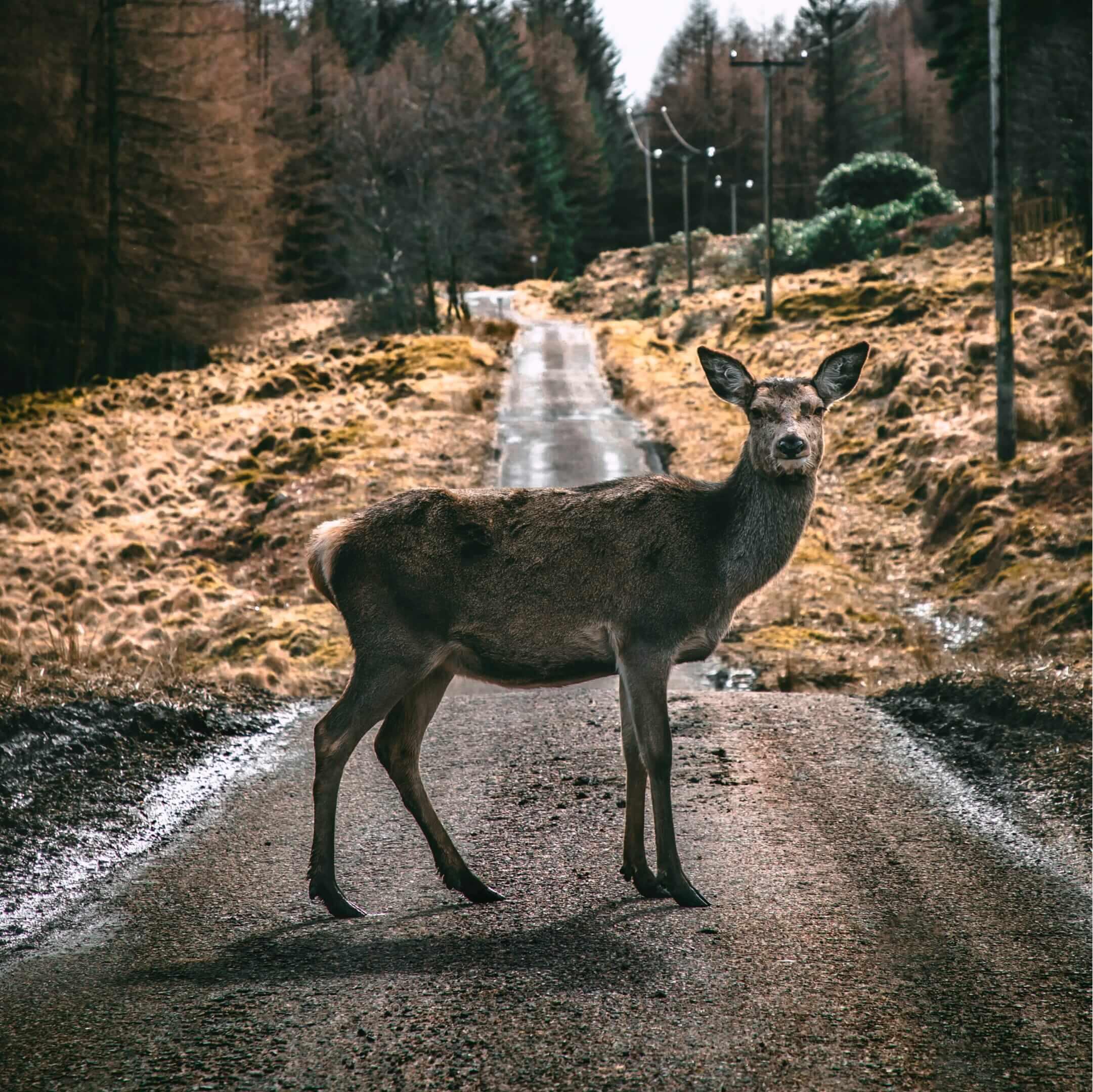 Долина Глен Этив вШотландском нагорье полна оленей икрасивых пейзажей. Фото:  Scott Jackson / unsplash