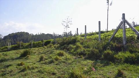 Plot 1 Creekside - Tea estate neighbour